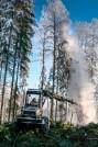 metsätyökone talvisessa metsässä