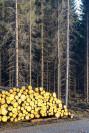 puupino metsätien varrella